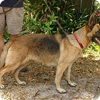 Adopt A Pet :: Sasha - Riverview, FL