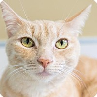Adopt A Pet :: Norene - Palm Springs, CA