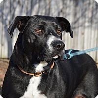 Adopt A Pet :: Cookie - CRANSTON, RI