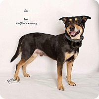 Adopt A Pet :: Rex - Riverside, CA