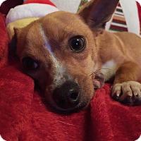 Adopt A Pet :: Thomas - Vancouver, BC