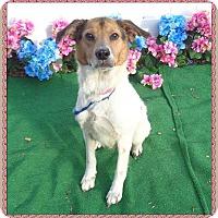 Adopt A Pet :: SHAYNA - Marietta, GA