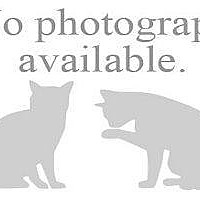 Adopt A Pet :: PAPRIKA - Hampton, VA
