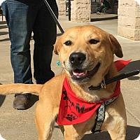 Adopt A Pet :: Bubba Gump - Alexandria, VA