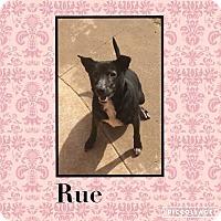 Adopt A Pet :: Rue - Enid, OK