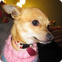 Adopt A Pet :: Cleo - Vacaville, CA