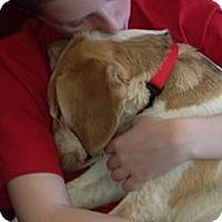 Adopt A Pet :: Harriet - Hollis, ME
