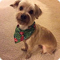 Adopt A Pet :: GABE - Melbourne, FL