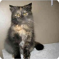 Adopt A Pet :: KT - Xenia, OH