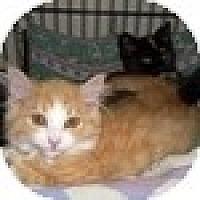 Adopt A Pet :: Orlando - Vancouver, BC