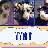 Adopt A Pet :: Tiny - Ranger, TX