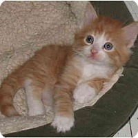 Adopt A Pet :: HunnyBear - Cincinnati, OH