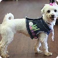 Adopt A Pet :: Candace - Mooy, AL