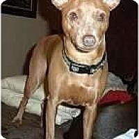 Adopt A Pet :: Spice - Minneapolis, MN
