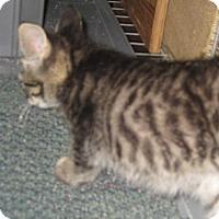 Adopt A Pet :: Dewberry - Dallas, TX