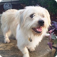 Adopt A Pet :: Hunter - Carrollton, TX