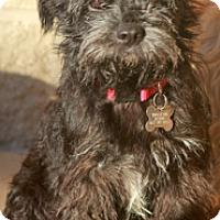 Adopt A Pet :: Bibbie-Meet Her! - Norwalk, CT