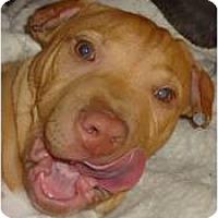 Adopt A Pet :: Liam - Cleveland, OH