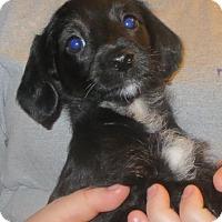 Adopt A Pet :: Suzie - Salem, NH
