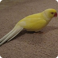 Adopt A Pet :: Juno - Tampa, FL