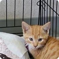 Adopt A Pet :: Tike - Visalia, CA