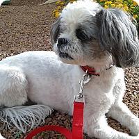 Adopt A Pet :: Anna - Las Vegas, NV