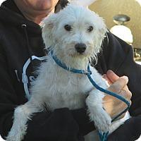 Adopt A Pet :: Chester - Turlock, CA