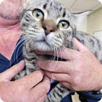 Adopt A Pet :: TORRES - Houston, TX