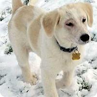 Adopt A Pet :: Cirrus / pup - pending - Beacon, NY