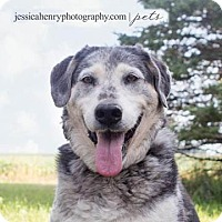Adopt A Pet :: Gus - Rockwell City, IA