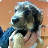 Adopt A Pet :: Fanny - Austin, TX