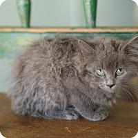 Adopt A Pet :: Delta - San Antonio, TX