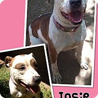 Adopt A Pet :: Josie - Scottsdale, AZ