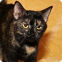 Adopt A Pet :: Lilly (Spayed)-New Photos - Marietta, OH