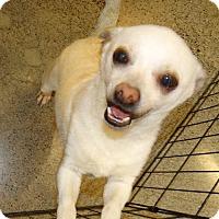 Adopt A Pet :: Sonny - Tacoma, WA