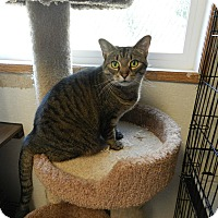 Adopt A Pet :: Anne - Plainville, MA