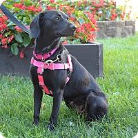 Adopt A Pet :: Gwen Stefani - Jersey City, NJ