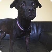 Patterdale Terrier (Fell Terrier) Mix Dog for adoption in Philadelphia, Pennsylvania - Michelle