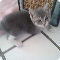 Adopt A Pet :: Pimienta - El Cajon, CA