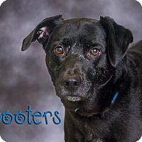 Adopt A Pet :: Booters - Somerset, PA
