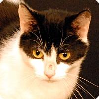 Adopt A Pet :: Serena - Newland, NC