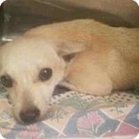Adopt A Pet :: Joey - ROSENBERG, TX