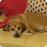 Adopt A Pet :: Terra - Billerica, MA