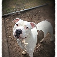 Adopt A Pet :: Randy - Brookhaven, NY