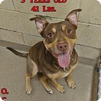 Adopt A Pet :: 1-6 Cassie - Triadelphia, WV