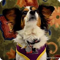 Adopt A Pet :: Winter - Edmond, OK