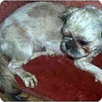 Adopt A Pet :: Freddy - Mays Landing, NJ