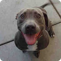 Adopt A Pet :: Mailey SUPER URGENT!! - Sacramento, CA