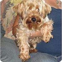 Adopt A Pet :: Luigi - Greenville, RI