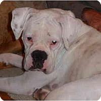 Adopt A Pet :: Pillsbury - Thomasville, GA